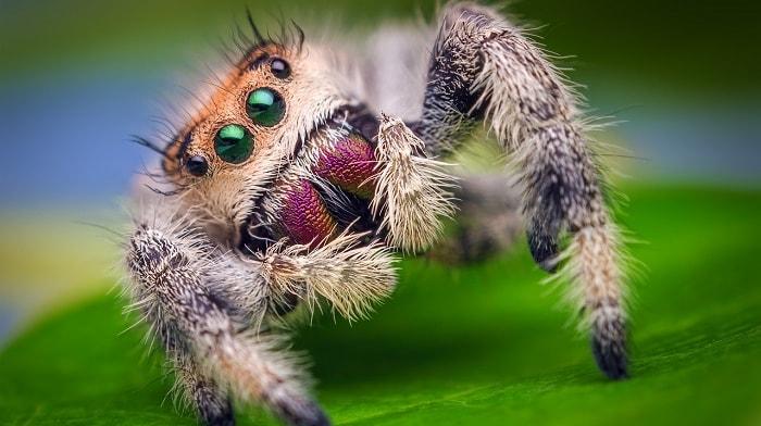 Удивительный мира пауков